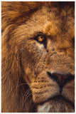 Lion 01 - Ceramic Tile Mural