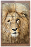 Lion Face 02 -  Tile Mural