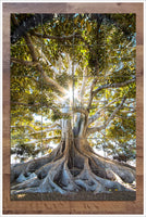 Old Tree -  Tile Mural