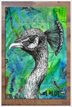 Peacock Graphic - Ceramic Tile Mural