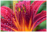 Pink & Yellow Hibiscus Flower -  Tile Mural