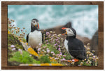 Puffins -  Tile Mural