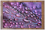 Purple Leaf -  Tile Mural