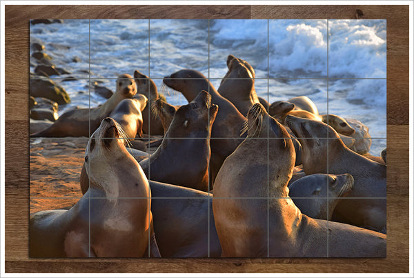 La Jolla Seals - Ceramic Tile Mural