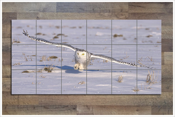Snow Owl -  Tile Mural