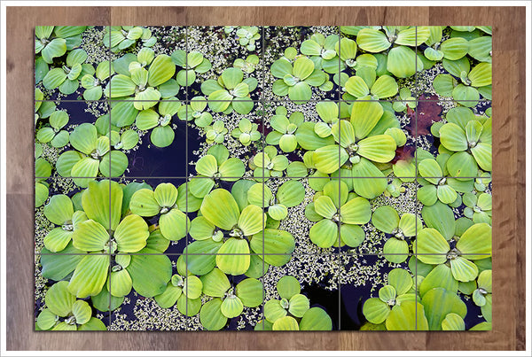 Water Lilly Pads -  Tile Mural