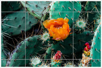 Cactus Flowers - Ceramic Tile Mural