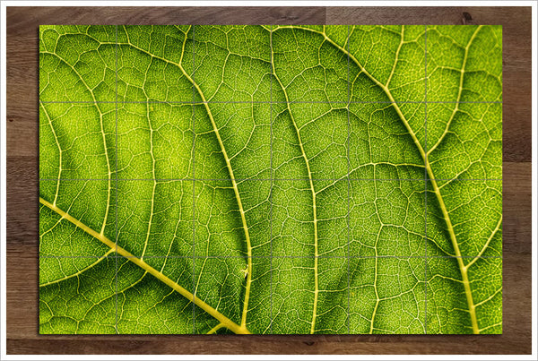 Abstract Leaf - Ceramic Tile Mural