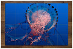 Pink Jellyfish 02 - Ceramic Tile Mural