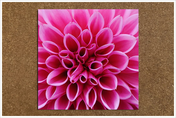 Pink Macro Flower -  Tile Accent