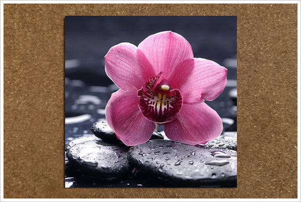 Pink Orchid on River Rocks - Ceramic Tile Accent