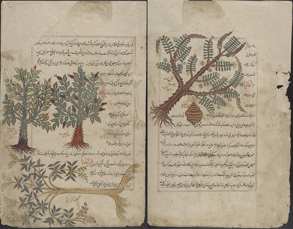 De Materia Medica, Persian translation illustrating botanicals used for health including brain herbs.