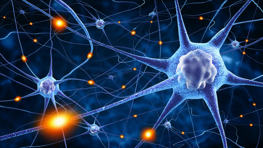 Neurotransmitters transmit messages between neurons via synapse.