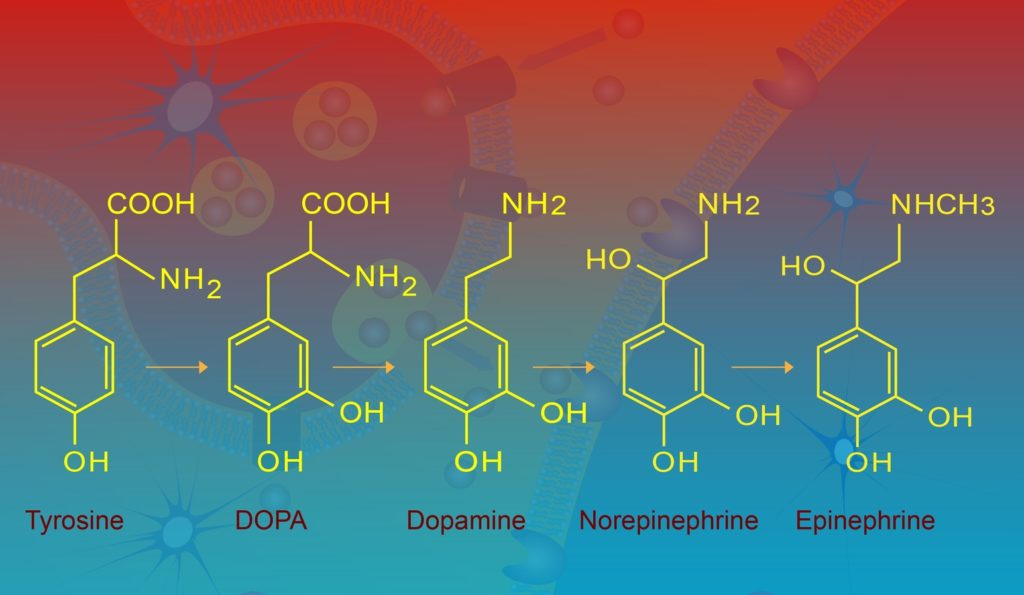 Tyrosine may be one of the most important nootropics for ADHD because it makes brain chemicals for attention.