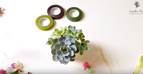 how-to-use-Floral-tape-with-succulents-step-by-step