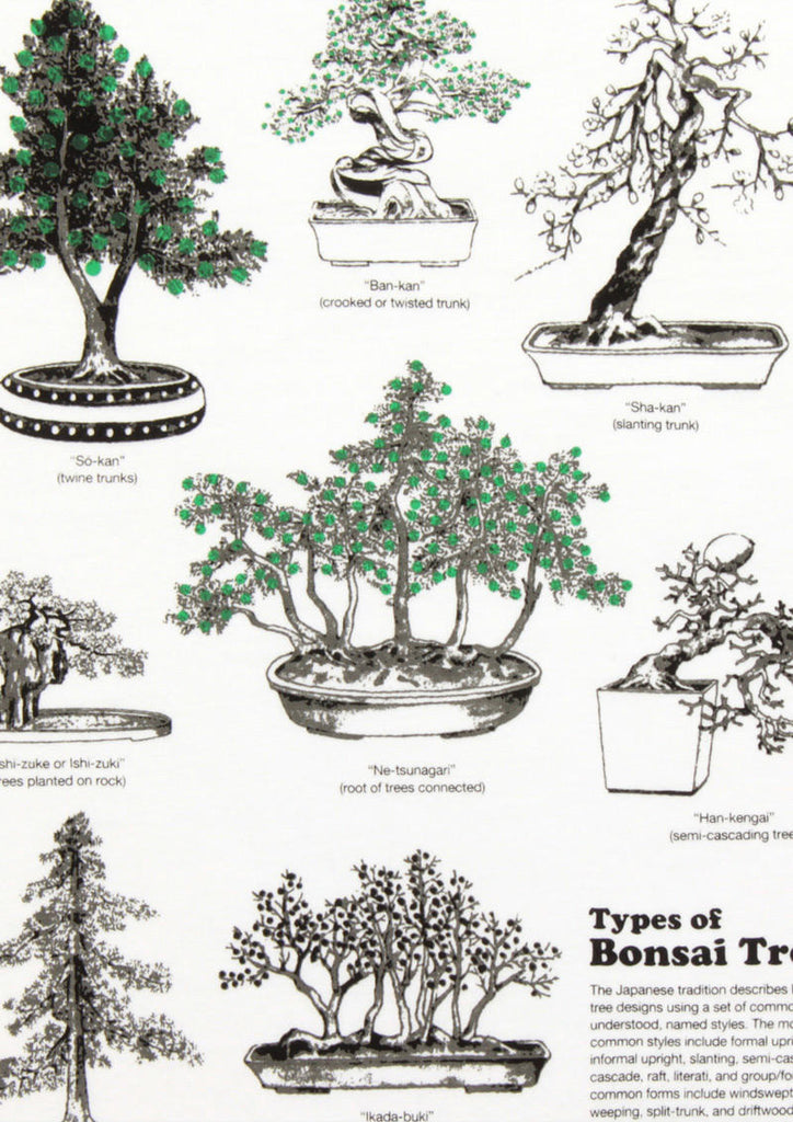 Types of Bonsai Tree