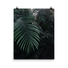 Grown tropical Poster - BlackKohco