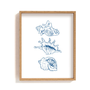 3 seashell types - Art Print