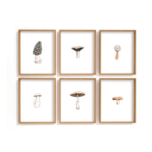 mushroom types illustration prints - gallery wall art