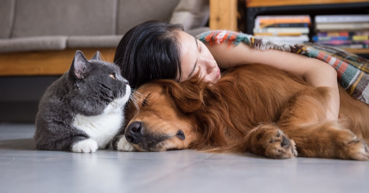 What Causes Urinary Tract Infections in Pets?