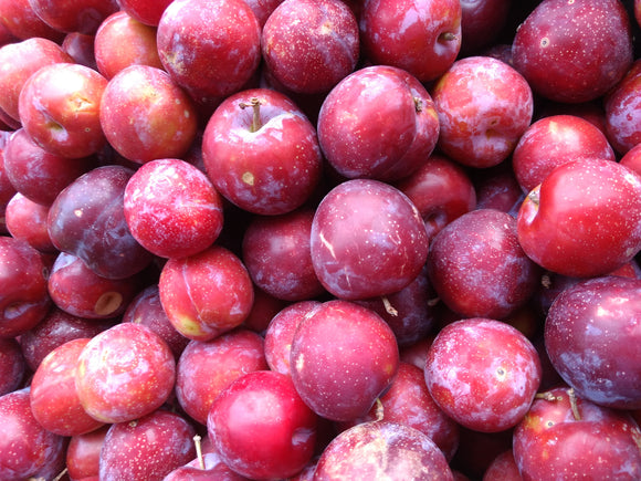 Plums Org. Red 1lb