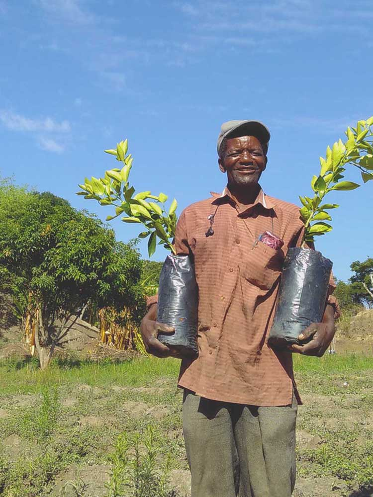 We plant trees in Zambia, Africa