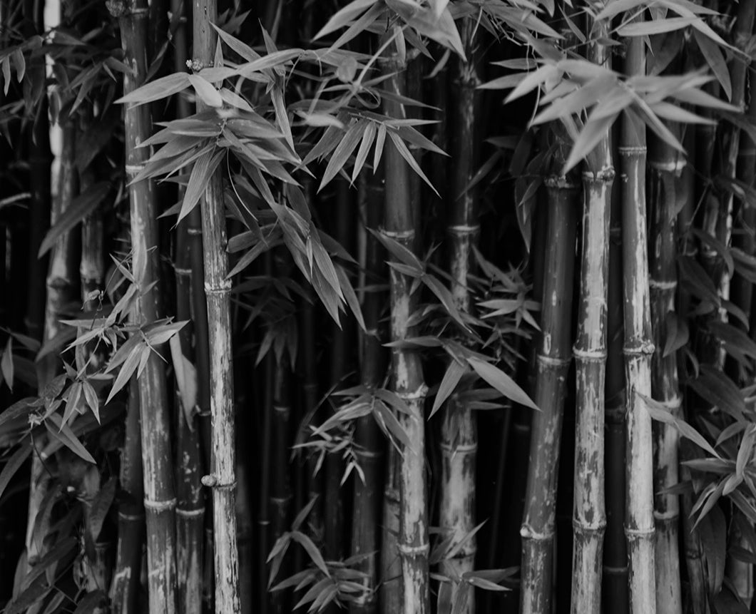 Different types of bamboo