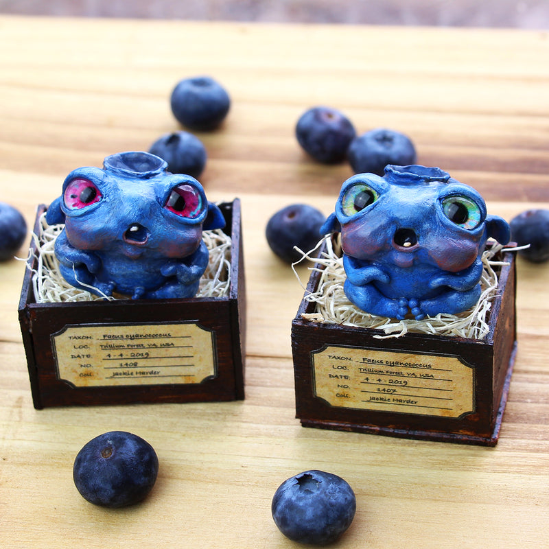 Faerie Blueberry Blind Box