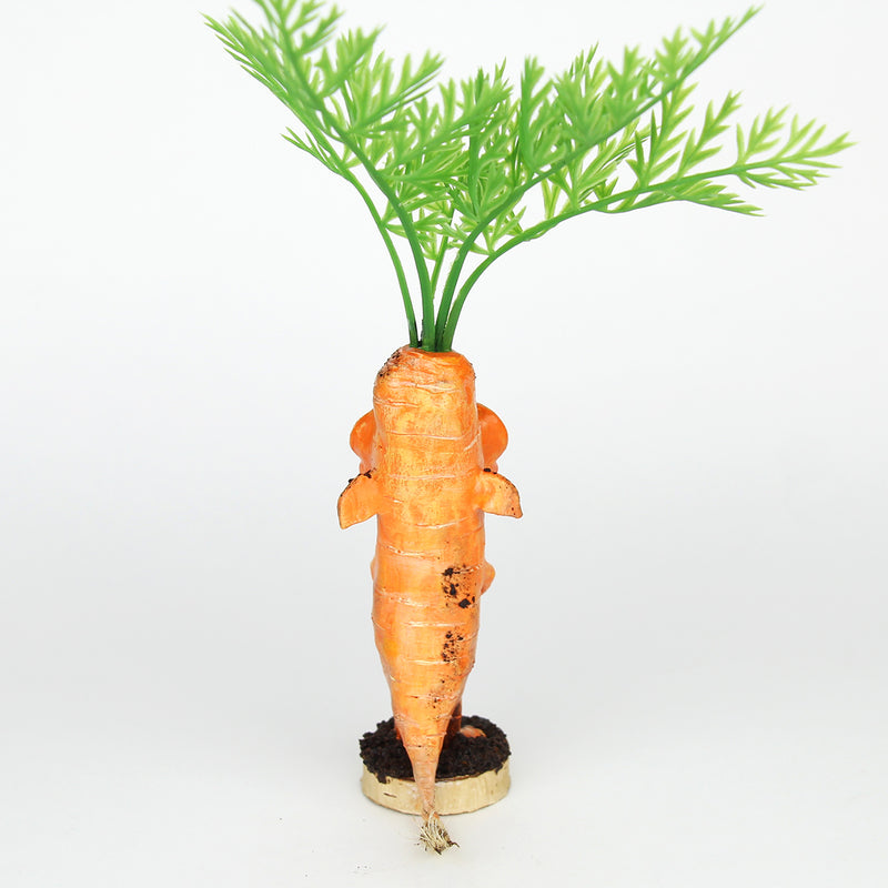 Tarroc the Faerie Carrot