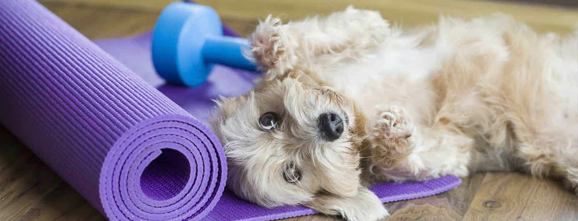 WOEF BLOG Doga yoga hond mens sport relax