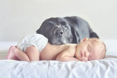 mastiff and infant
