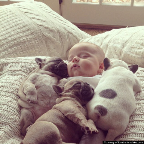 puppy frenchies with baby sleeping