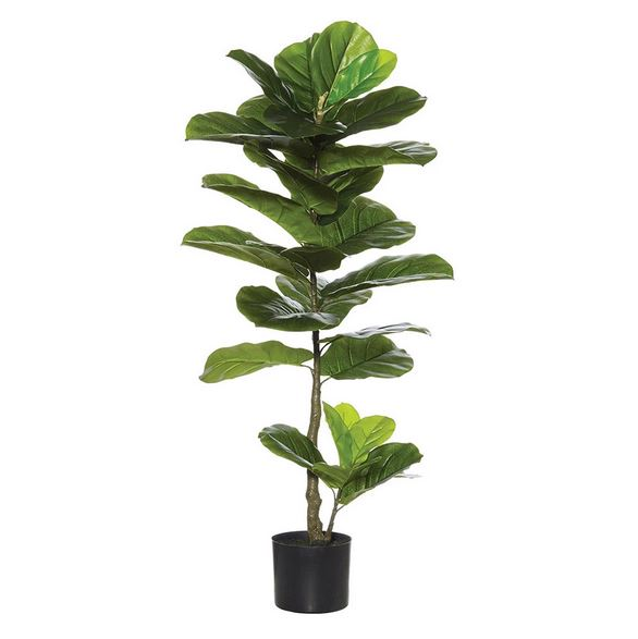 "14"" Fiddle Leaf Fig Tree"