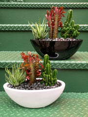 Thompson Street Cactus and Succulent Garden