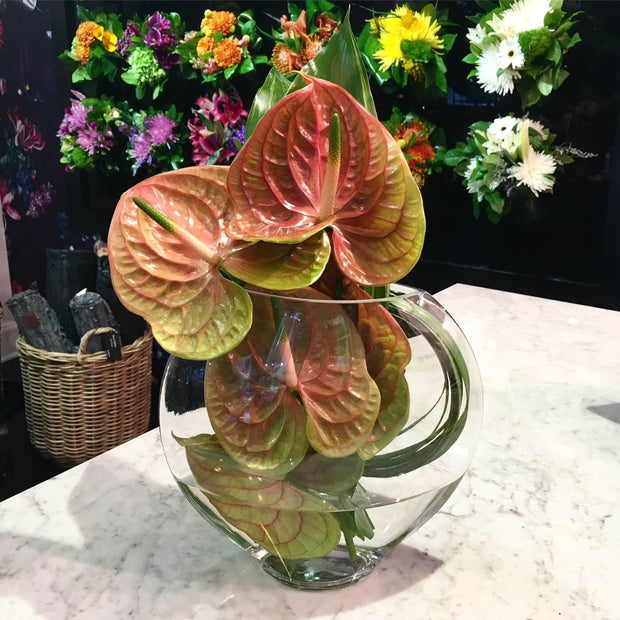 Anthurium Lover