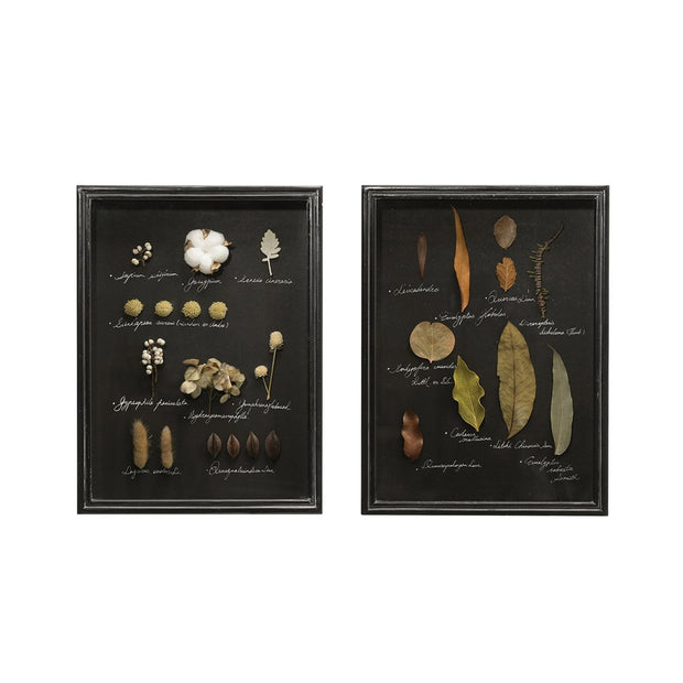 Wood & Glass Shadow Box Wall Decor with Dried Botanicals (2 styles)
