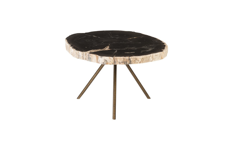 Wodas Petrified Wood Coffee Table I