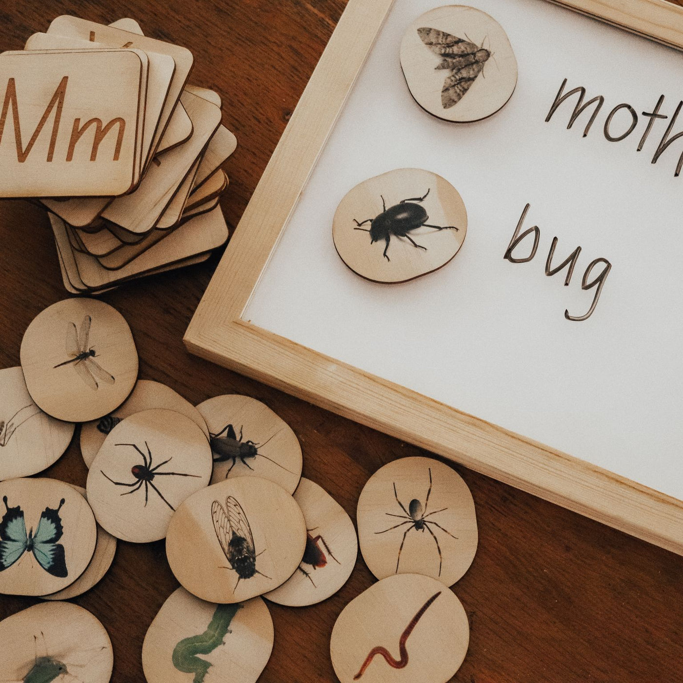 Bug Themed Magnets