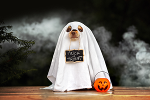 Dressing Up Your Pet This Howl-o-ween