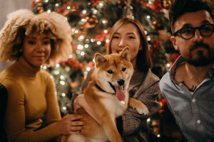 Tips to Keep Your Pup Calm During the Holiday Chaos