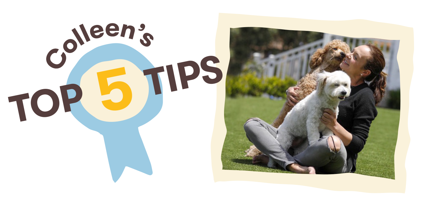 Colleen's Top Five Dog Training Tips