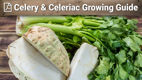 Celery and Celeriac Growing Guide