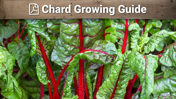 Chard Growing Guide