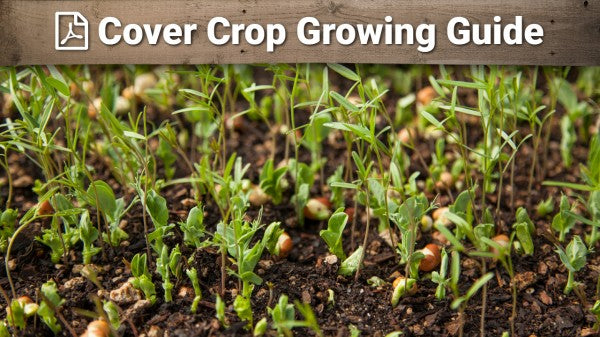 Cover Crop Growing Guide