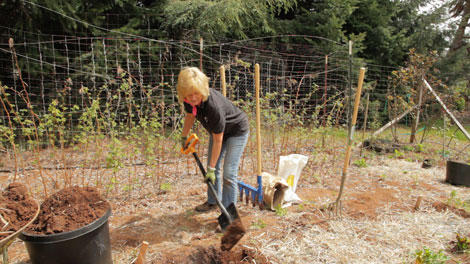 Double Digging: A Hallmark of French Intensive Gardening