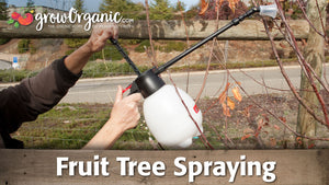 Fruit Tree Spraying for Dormant Trees