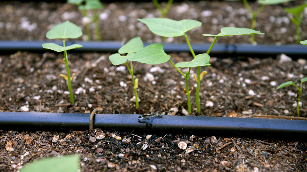 Drip Irrigation-Part 4-Using Emitterline in the Garden
