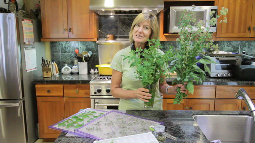 How to Harvest Annual and Perennial Herbs