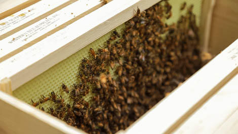 Meet the 3 Kinds of Honey Bees in a Hive