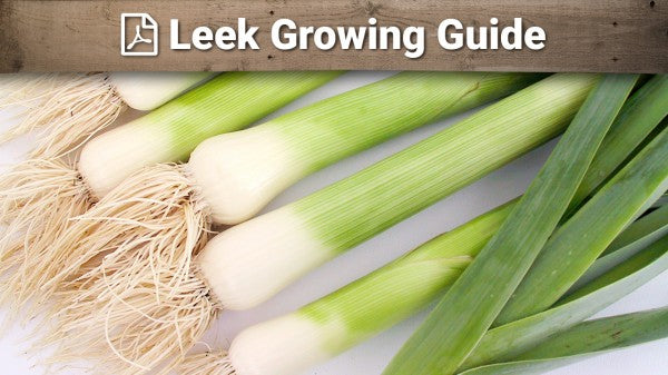 Leek Growing Guide